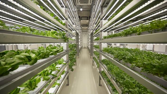 iFarm vertical farms